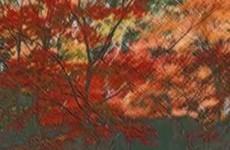 紅一葉 | 初音ミク(ボカロ)